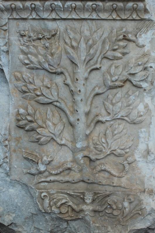 Life Tree Syracuse2015